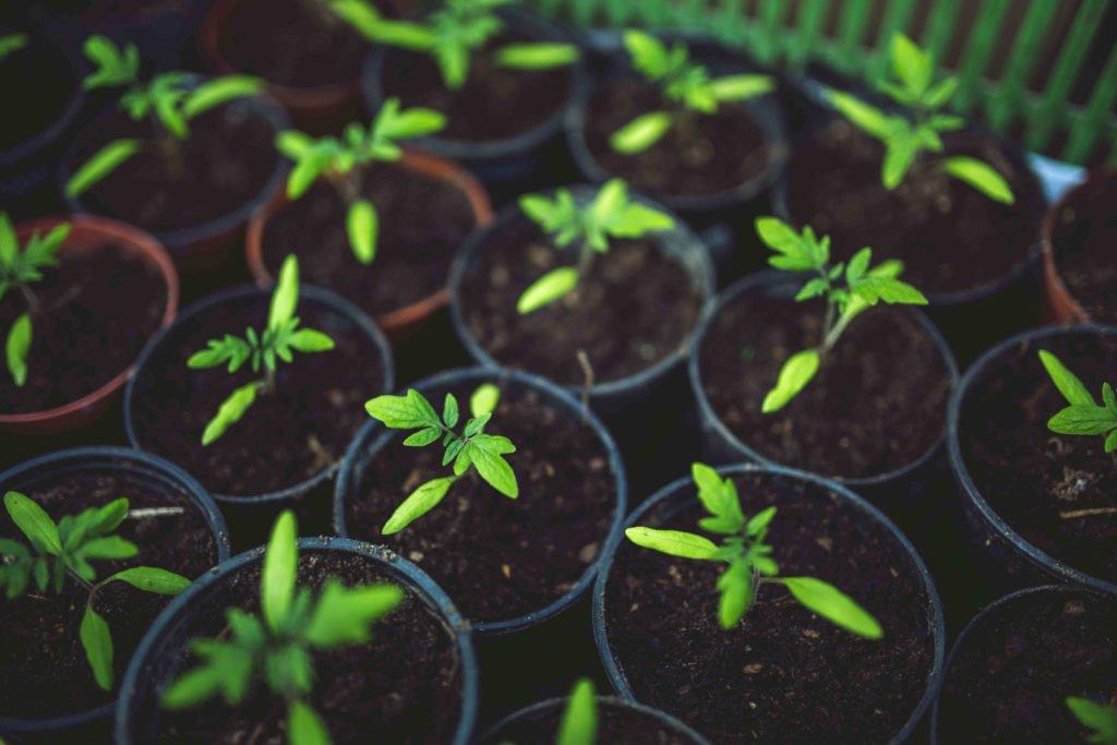 Soil & Garden Mix Calgary