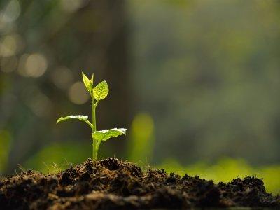 Soil Amendment Calgary