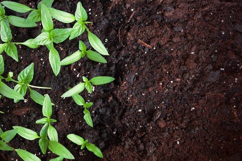 Best Soil Calgary